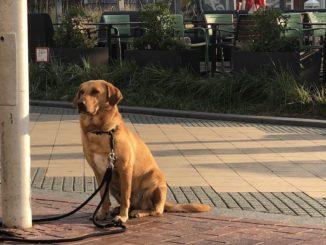 Urlaub mit dem Hund in Scharbeutz