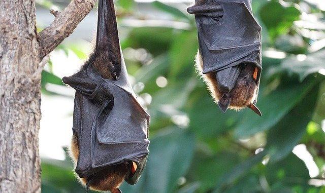 Noctalis - Welt der Fledermäuse